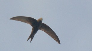 Swift by Mark Kilner