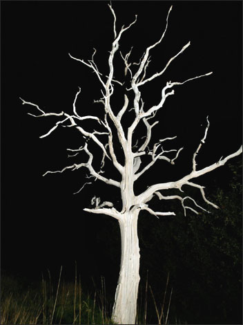 bbc essex in pictures a spooky tree by the a120