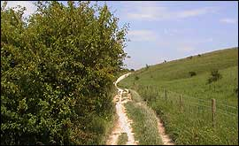 Chalk downland and trackway