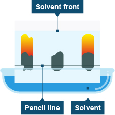 Diagram of a chromatography experiment
