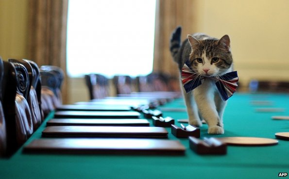 Larry the cat in the Downing St Cabinet Room