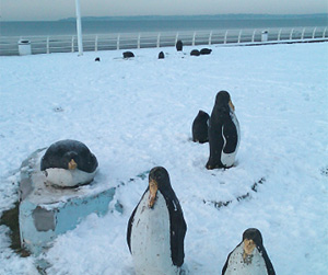 concrete penguins on Aberavon sea front by Susan llewellyn