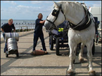 Sam the Percheron horse with the brewery draymen