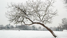Tree in snow-covered park
