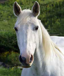 the white horse of alih plot Synopsis of the white horse of alih by: sheryll c mendoza ( march 26,  2009 ) the story happened on july 4th in a city with a parade of people it was a.