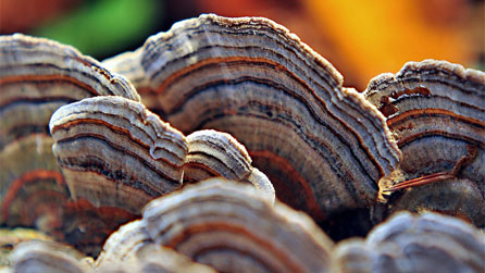 A colourful turkey tail by Gale Jolly.