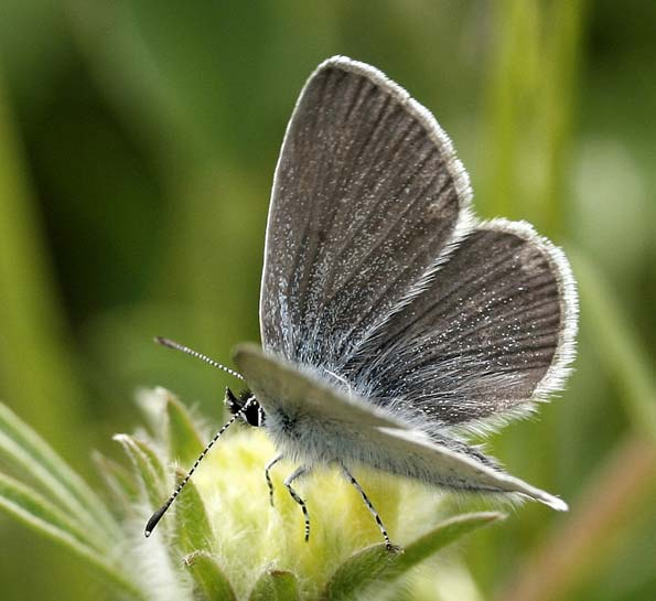 small blue butterfly by Mary Woodford