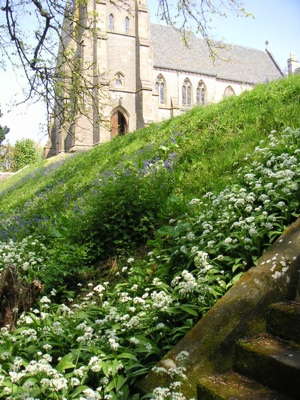 In early summer the cathedral grounds are strewn with flowering garlic—yes, garlic!