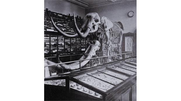 A mastodon skeleton on display in the British Museum. Photo: Frederick York, 1875. © Trustees of the British Museum