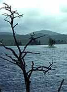 Image of crannog remains in a Scottish loch