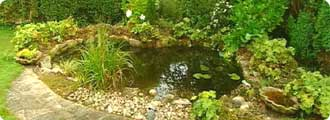 BBC Gardening How to be a gardener Water garden Pond basics