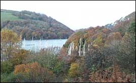The woods along the River Dart near Kingswear
