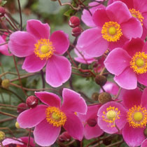 Shade Garden Design Plans Perennials