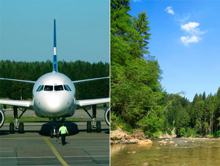 First half: Front nose of a plane. Second half: Image of forest offsetting pollution from aeroplane emmissions.