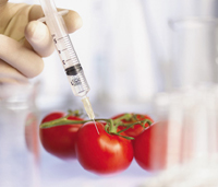 Injecting a tomato with a syringe