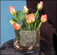 place roses in the vase