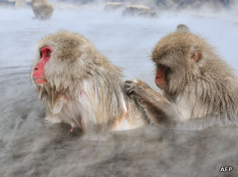 A macaque monkey scratches another's back in a hot spring in Japan.