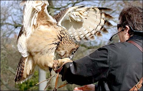 Jemima with an Eagle Owl at the International Centre for Birds of Prey near Newent, taken by Rob Ward
