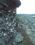Photo of the cliff face at Westray