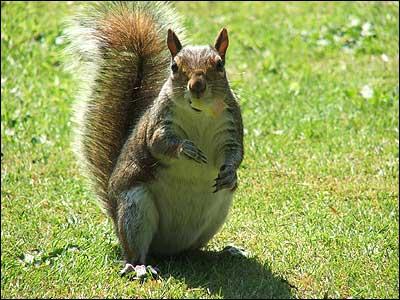 Park Ipswich Animals Christchurch Park Ipswich