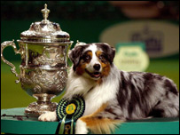 An award-winning dog next to its prize