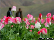 Poppies, Badakhshan, 2005
