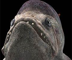 BBC - Science & Nature - Sea Monsters - Fact File: Xiphactinus