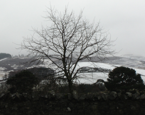 snow near Peebles