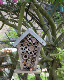 solitary bee home