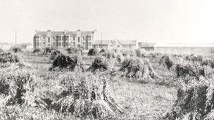 Small haystacks in a wide field with a tenement block and other buildings beyond.