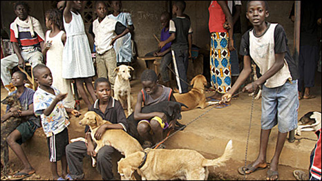 The street dogs of Freetown, Sierra Leone