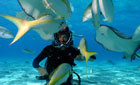 Steve and fish in the Cayman Islands © BBC