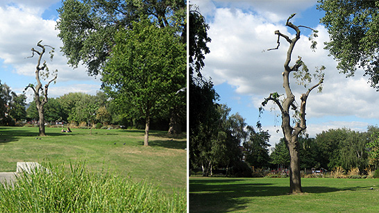 Two images of a park - the first has too many focal points - a bench, trees, grass, people; the second has one clear focal point - a tree