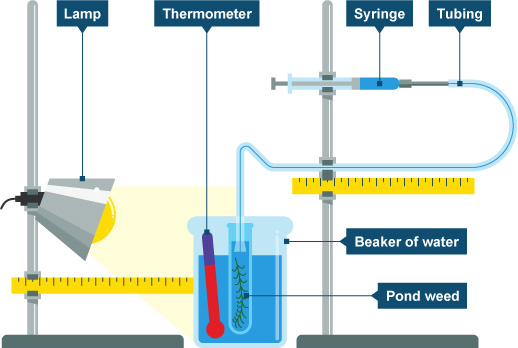 Bbc gcse bitesize fieldwork techniques diagram of photosynthesis experiment equipment ccuart Choice Image