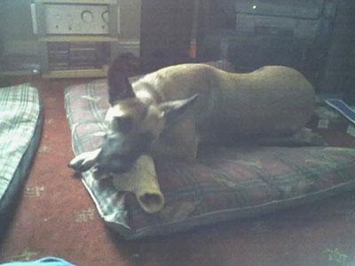 Hampole Dog Rescue Doncaster