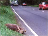 Injured deer at side of road . Image copyright: Jochen Langbein
