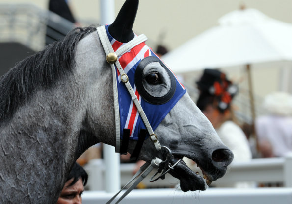 A horse with a union jack hat