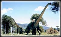 Why did dinosaurs like brachiosaurus suddenly become so large?
