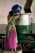 Woman working in a tea factory