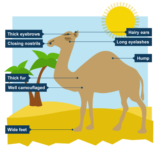 plants adapting to shade conditions essay P lants have adaptations to help them survive (live and grow) in different areas adaptations are special features that allow a plant or animal to live in a particular place or habitat.
