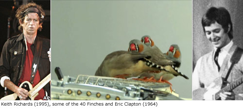 Keith Richards, birds and Eric Clapton