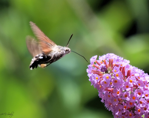 10 Fantastic And Bizarre Caterpillar Facts  Listverse