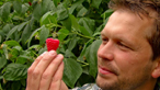 Reduced use of pesticides for growing raspberries