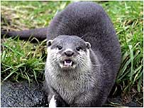Otter c/o PA Images