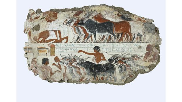 Painting from the tomb-chapel of a scribe shows cattle being herded around 1350 BC. © Trustees of the British Museum