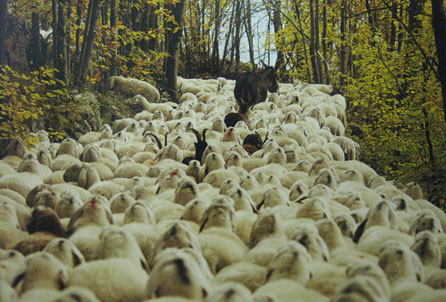 Photograph by Dragos Lumpan showing Transhumance in Italy. Image courtesy of the artist