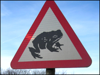 Toad crossing sign