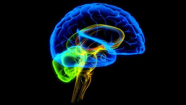 Why Educators Trained In Neuroscience >> Bbc Scotland Learning Blog Neuroscience In Education