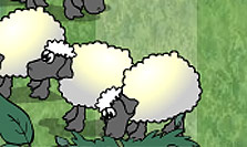 Sheep dash!