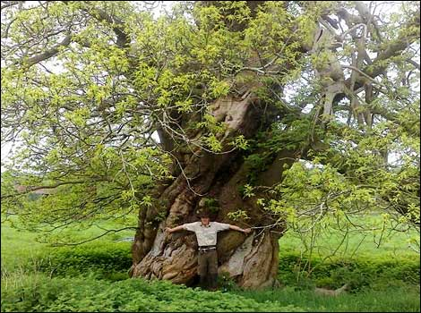 Wiltshire's Ancient Trees